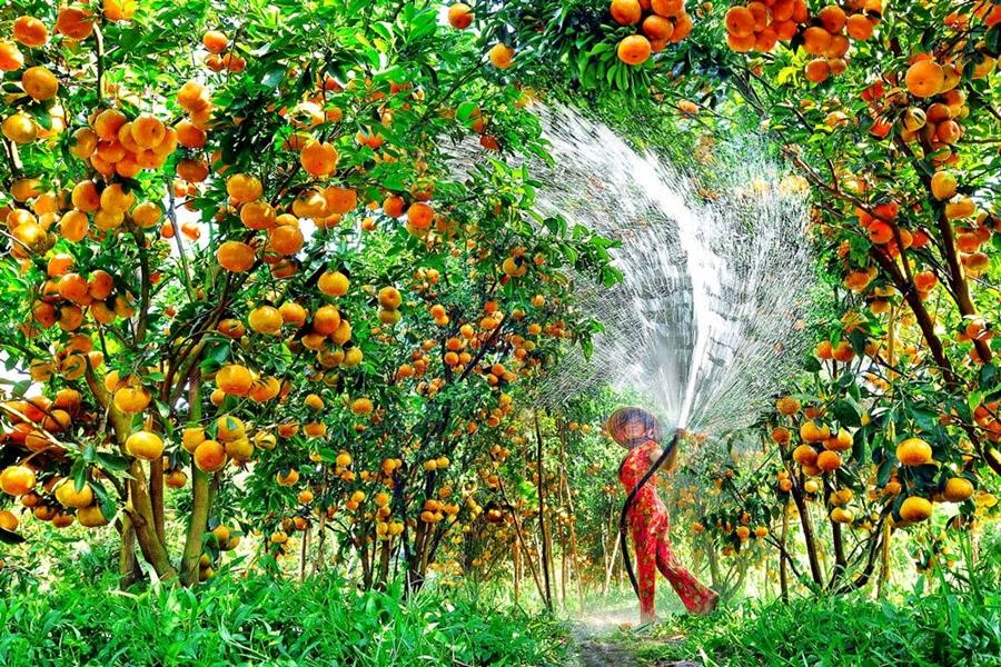 Lấy sỉ trái cây ở đâu chất lượng tốt