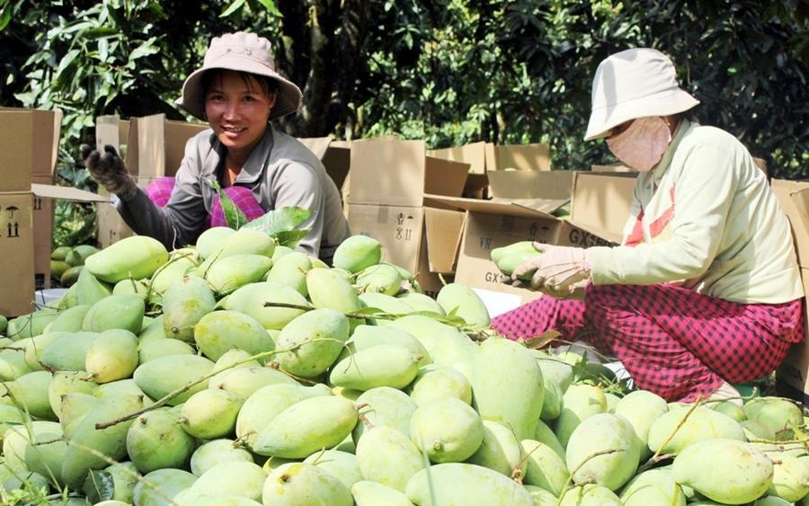 Lấy sỉ trái cây ở đâu chợ Cao Lãnh
