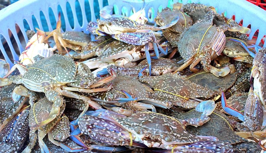 Kinh nghiệm kinh doanh hải sản online hiệu quả