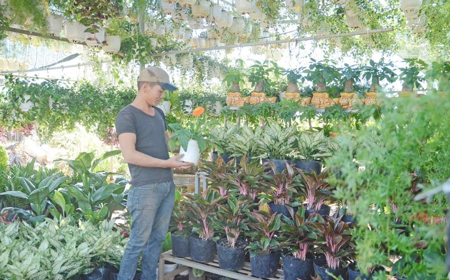 Kinh nghiệm mở cửa hàng kinh doanh cây cảnh