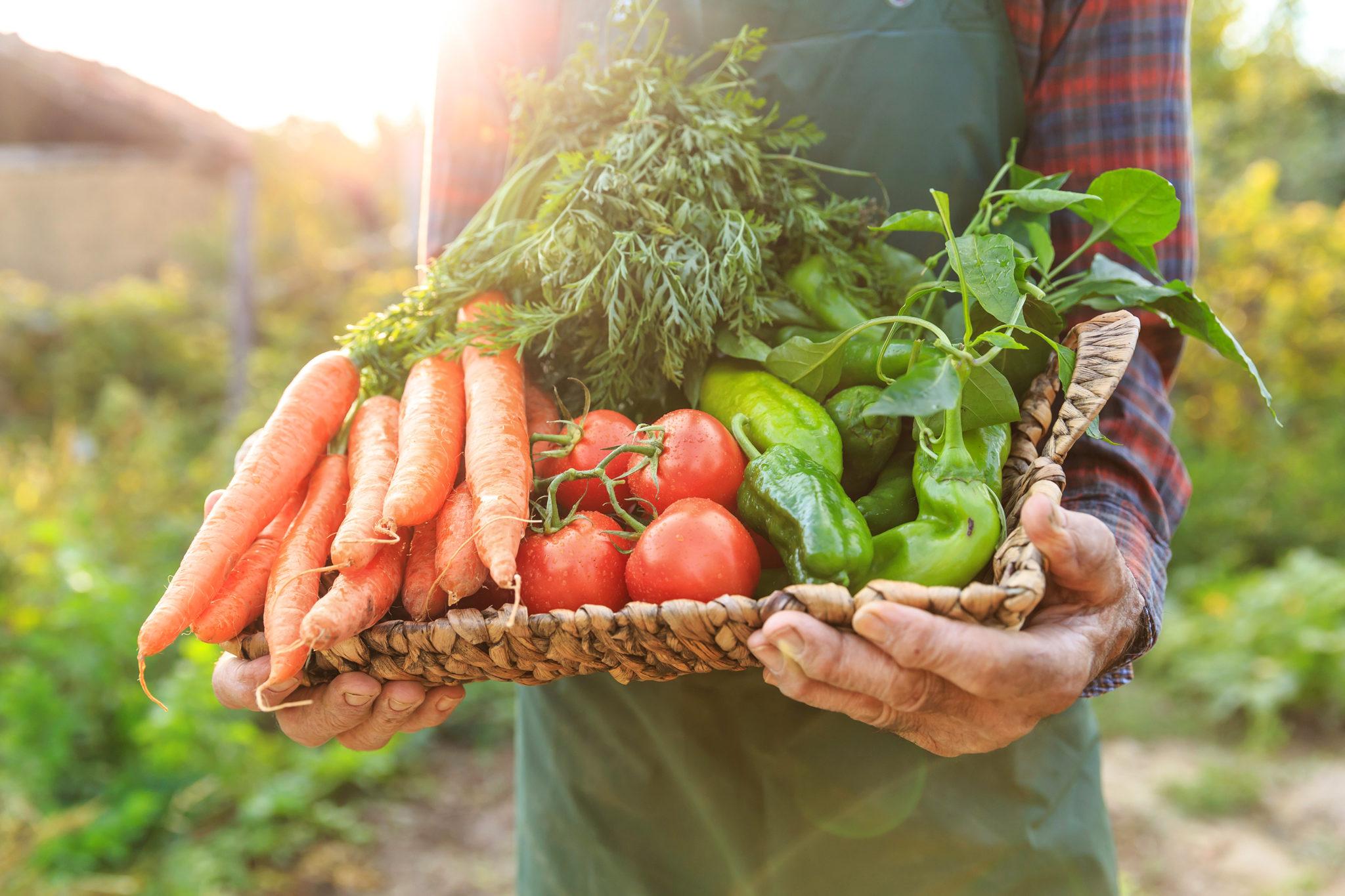 Kinh doanh online thực phẩm sạch cần chú ý những điều gì ảnh 2